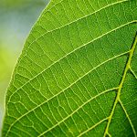 Biofuels: Whats Next?